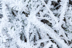 Crystals of  frost cover green grass Royalty Free Stock Photo