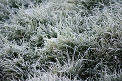 Crystals of hoar frost on leaves of green grass Royalty Free Stock Photography
