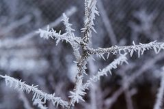Crystals of ice on a branch, beautiful nature Stock Image