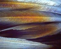 Crystals of Sweetner x400 under polarised light royalty free stock photos