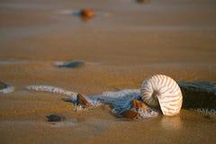 Cáscara del mar del nautilus en la playa de Océano Atlántico Legzira Foto de archivo libre de regalías