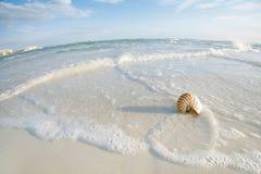 Cáscara del nautilus en una arena de la playa del océano del mar Imágenes de archivo libres de regalías