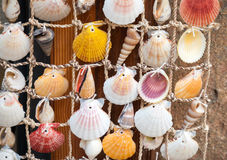 Cáscaras coloridas en la red, decoración marina Imagen de archivo