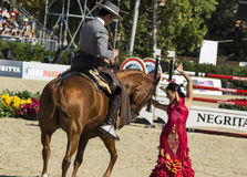 CSIO BARCELONA 2014 - FLAMENCO EQUESTRIAN EXHIBITION. CSIO Barcelona, 103rd International Jumping Competition. Furusiyya FEI Nations Cup Stock Images