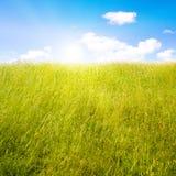 Césped idílico con luz del sol Fotos de archivo