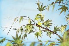 csr зеленый s компании повестки дня Стоковые Фото