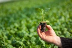 拿着有土壤的人的手年幼植物在被弄脏的自然背景 生态世界环境日CSR幼木去 库存图片