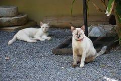 Cst-hiso mit Katze loso Lizenzfreie Stockbilder