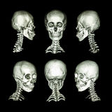 CT扫描和3D图象 正常人的头骨和子宫颈脊椎 所有方向 免版税库存图片