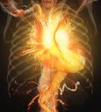 CTA Wieńcowej arterii 3D rendering zdjęcie stock