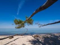 Côte de mer baltique Image libre de droits