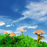 Céu azul do cogumelo mágico Fotografia de Stock
