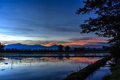 Céu crepuscular no campo do arroz Imagens de Stock Royalty Free