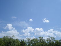Céu e vegetação na mola Fotos de Stock Royalty Free