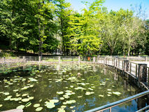Cu Nuferi (lac Waterlilies), Felix Baths - Baile Felix, B de Lacul Photos libres de droits