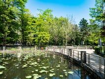 $cu Nuferi Lacul (λίμνη Waterlilies), λουτρά του Felix - Baile Felix, Β στοκ φωτογραφία με δικαίωμα ελεύθερης χρήσης