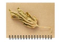 Cuaderno y una hoja seca fotografía de archivo libre de regalías