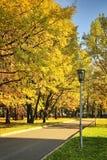 Cuadrado de ciudad en follaje de oro del otoño Fotos de archivo libres de regalías