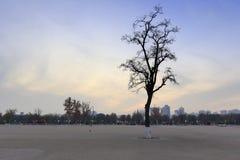Cuadrado de la oscuridad daming del palacio en invierno Foto de archivo libre de regalías