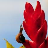 Cuadrado del caracol de tierra cosechado Foto de archivo libre de regalías