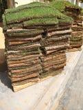 Cuadrados de la hierba Fotos de archivo libres de regalías