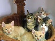 cuadrilla del gato Foto de archivo libre de regalías