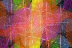 Cuadro abstracto de las hojas de los esqueletos Fotos de archivo libres de regalías