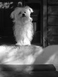 Cuadro blanco y negro de un perro fiel que espera en el país Imagen de archivo libre de regalías