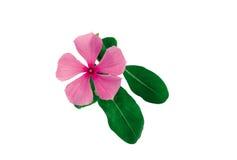Cuadro de plantas imagen de archivo libre de regalías