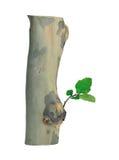 Cuadro de plantas Imagenes de archivo
