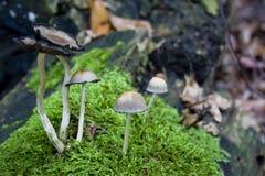 Cuadro del bosque Foto de archivo libre de regalías