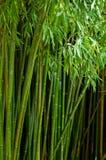 Cuadro del bosque de bambú con el DOF bajo Imagen de archivo libre de regalías
