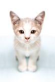 Cuadro del gatito lindo pensativo fotos de archivo libres de regalías