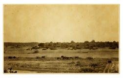 Cuadro del safari de la vendimia Fotografía de archivo libre de regalías