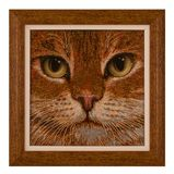 cuadro Gato, gotas Foto de archivo