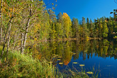 Cuadro hermoso del otoño del lago en Finlandia Imagenes de archivo