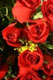Cuadro rojo de las rosas Imagen de archivo