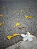 Cuando cae la flor abajo fotografía de archivo libre de regalías