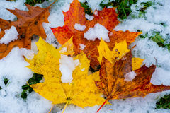 Cuando chocan la caída y el invierno Imagen de archivo