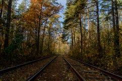 Cuando la manera pasa a través del bosque Foto de archivo libre de regalías