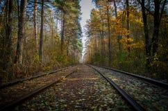 Cuando la manera pasa a través del bosque Imagen de archivo