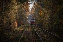 Cuando la tranvía de la ciudad pasa a través del bosque Fotos de archivo