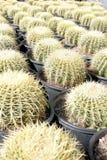 Cuarto de niños del cactus de barril fotos de archivo