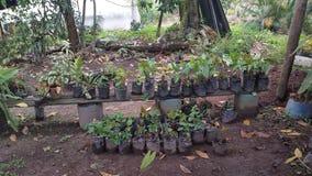 Cuarto de niños ese vidas - Siguatepeque Honduras fotografía de archivo