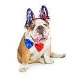 Cuarto patriótico americano divertido del perro de julio Imagen de archivo libre de regalías