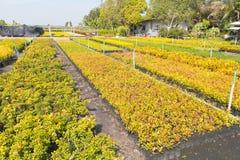 Cuartos de niños de Oregon y plantas de la planta de semillero Foto de archivo libre de regalías