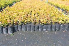 Cuartos de niños de Oregon y plantas de la planta de semillero Fotos de archivo