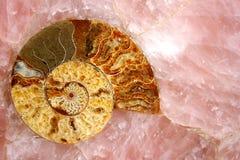 Cuarzo rosado con el fósil del amonyte   Imagen de archivo
