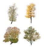 Cuatro árboles Fotos de archivo libres de regalías