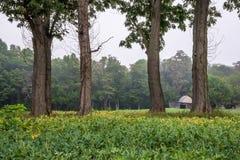 Cuatro árboles Imagenes de archivo